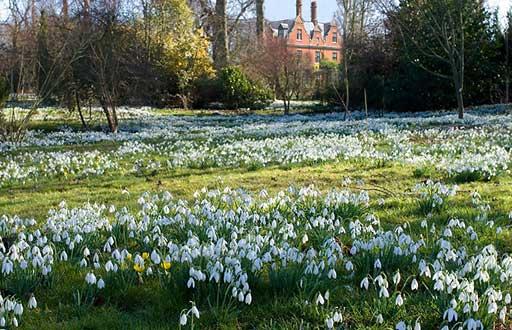 chippenham park cambridgeshire open garden at gardens. Black Bedroom Furniture Sets. Home Design Ideas